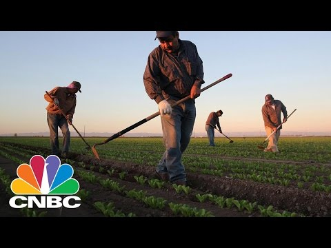 The Economic Costs Of An Immigration Crackdown | CNBC