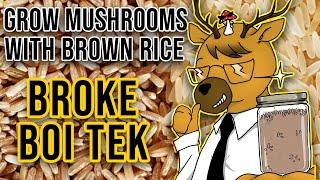 EASIEST Way to Gŗow Mushrooms - Broke Boi Tek