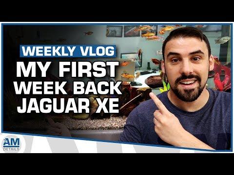 My First Week Back - Jaguar XE Enhancement Detailing