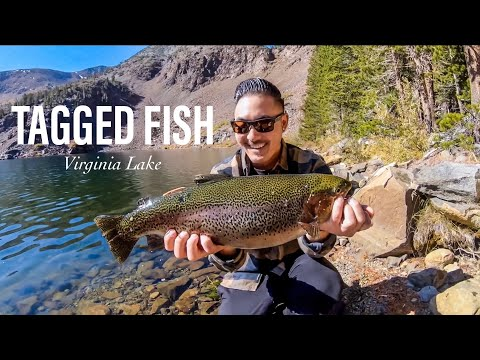 TAGGED FISH! Virginia Lake! Prize Winner!