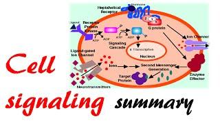Cell signaling summary