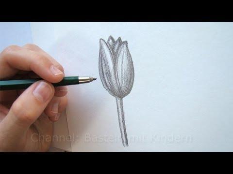 Zeichnen lernen Blume zeichnen  Tulpe  Blte  YouTube