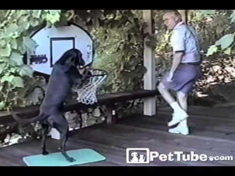 Animals DUNKING Basketballs- PetTube