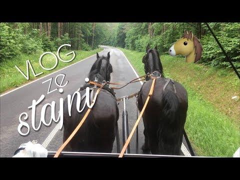 Vlog Ze Stajni #17  Bryczka I  Festyn