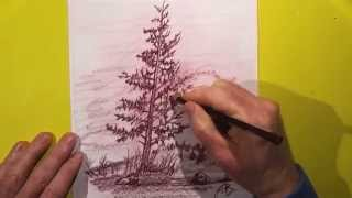 Pencil Drawing : Lone Pine Tree