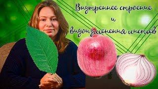 Внутреннее строение и видоизменения листьев. Урок биологии №83.