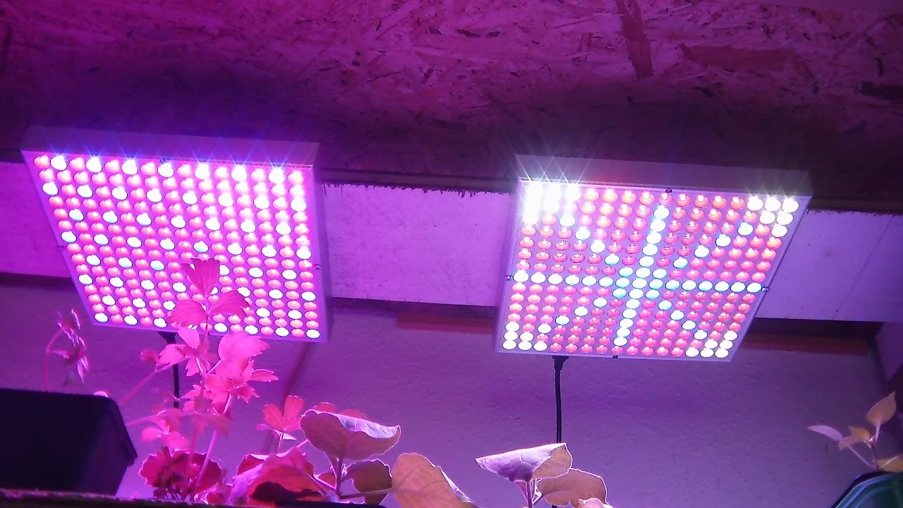 LED Growlampen im Vergleichstest Teil 1 - YouTube