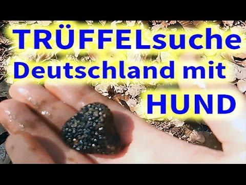 Trüffel Suchen In Deutschland