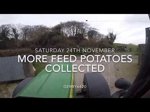 MORE FEED POTATOES COLLECTED