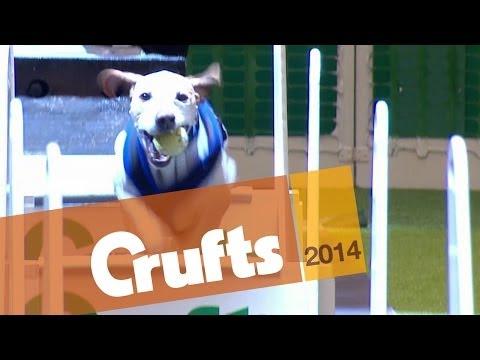 Flyball   First Quarter Final   Crufts 2014