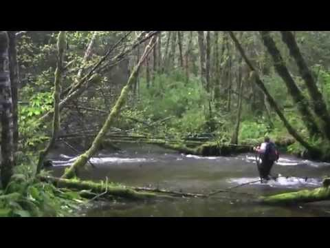 Atlantic Salmon Documentary - Salmon Farms in Canada & Diseased Salmon - Fishing Tv HD