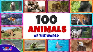 100 Animal Flashcards for Kids - Animals Names and Sounds for Toddlers - Animal Videos for Children