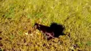 Fancy's Potty Training Video #2