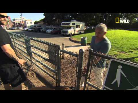 "Cesar 911 - ""Dog Fight"" Deleted Scenes"