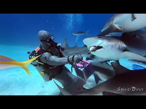 Amazing SHARKS FEEDING in the BAHAMAS - SpiritDiver Xiaomi YI II 4K