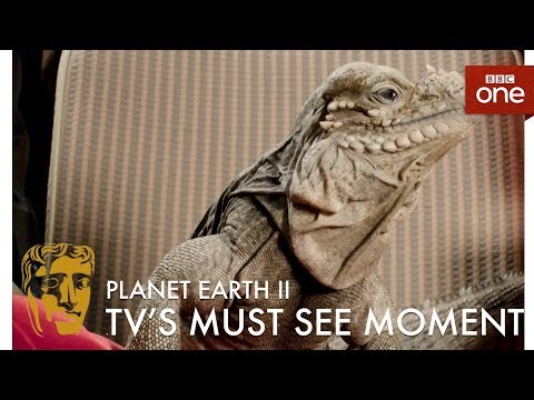 Planet Earth II: Snakes vs Iguana Chase wins Must-See Moment - The British Academy Television Awards