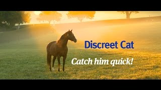 Discreet Cat, the one to catch in 2016