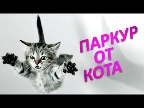 ПАРКУР ОТ КОТА - Purrkour