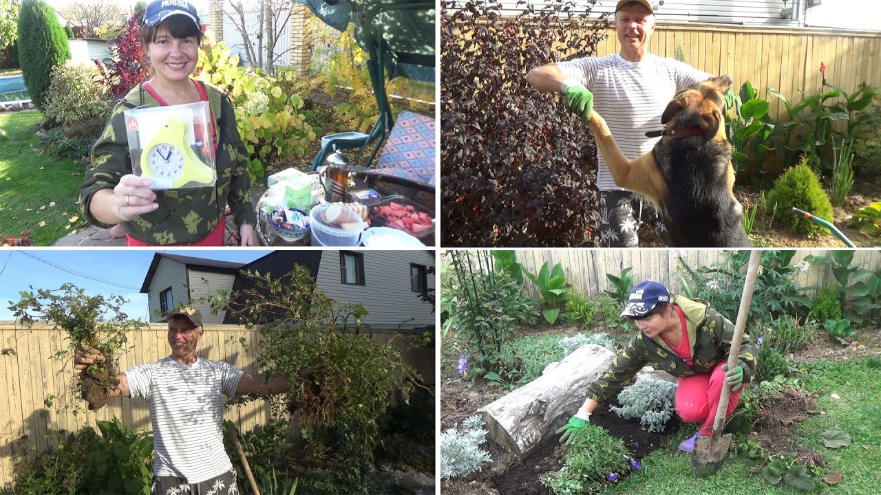 ВЕСЕЛЫЙ ВЛОГ из САДА: БУДИЛЬНИКИ от КРОТОВ, посадки и пересадки растений в цветнике, чай и Буян!