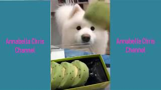 Compilation of these Fun action of animals 29  II CAN'T LAUGH CHALLENGE