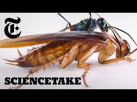 The Cockroach Karate Kick | ScienceTake