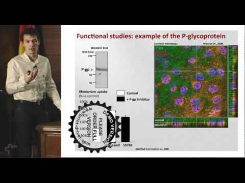 Seminar: In vitro approaches to the blood-brain barrier (Dr. Vincent Berezowski)