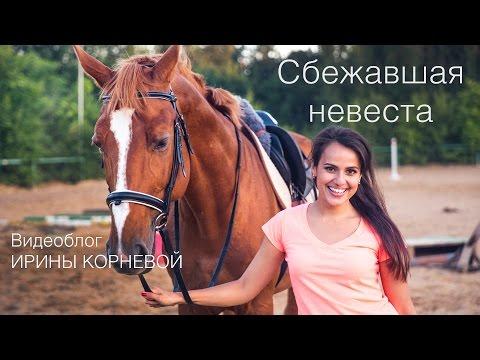 Заказ лошадей на свадьбу в Спб.