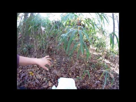Korean Natural Farming - IMO Part 1