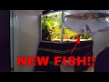 New fish to 720 liter(190g).