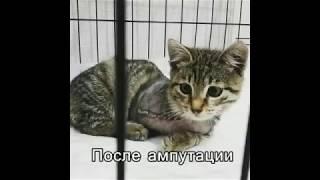 Косоокий кошеня | Без лапи грає з іграшкою