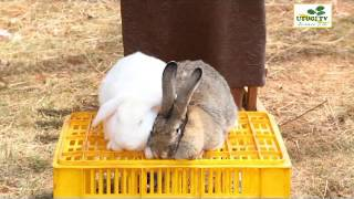 Utugi TV - Rabbit Farming Pt 2
