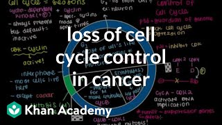 Loss Of Cell Cycle Control In Cancer | Cells | Mcat | Khan Academy