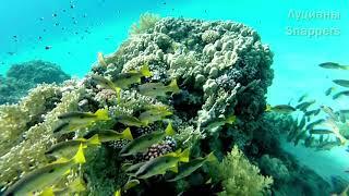 Рыбы и другие обитатели Красного моря с названиями