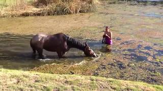 Sexy Girls Bathing a Horse Smart Farming Hot Lady Woman Washing Cleaning in the Water