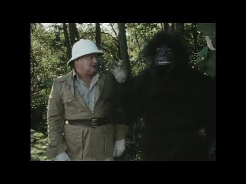 Бенни Хилл в джунглях. Шоу Бенни Хилла, лучшее.  #bennyhill #беннихилл #шоубеннихилла #benny #hill