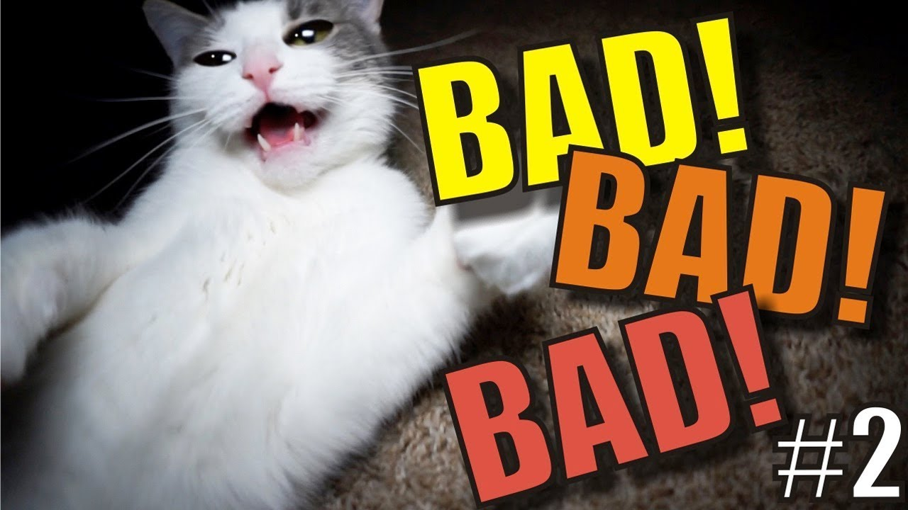 Download Talking Kitty Cat 66 - BAD! BAD! BAD! #2