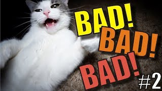 talking-kitty-cat-66-bad-bad-bad-2