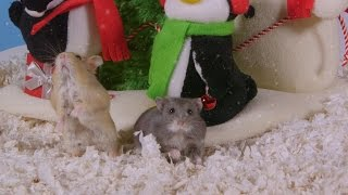 Day 6: Christmas Magic Trick - Cute Hamsters: 12 Days of Christmas