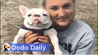 Abandoned French Bulldog with Cancer Finds PERFECT Mom | The Dodo Daily thumbnail