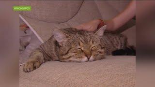 В Красноярске кот вернулся домой спустя 7 лет