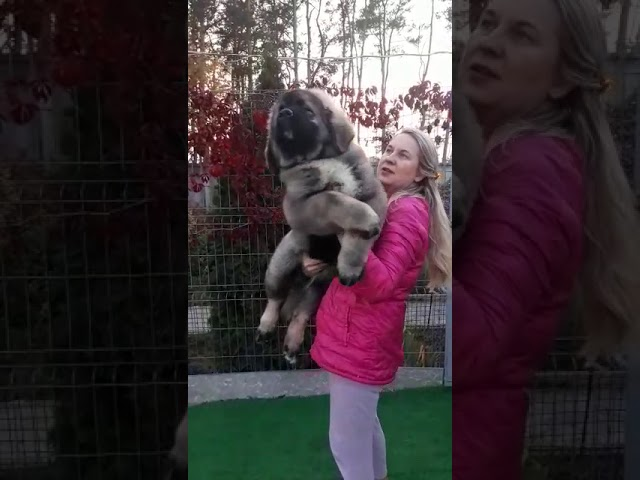 Female # 04 for sale 3.5 months (video 1)