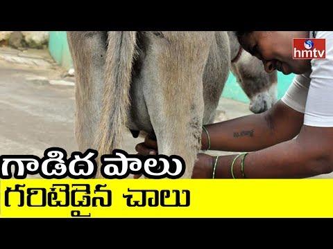 Huge Demand for Donkey Milk | Special Story on Donkey Milk | Khammam | HMTV