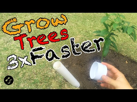 How to plant a tree so that it grows 3 times faster. Root training method.