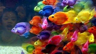 سلاحف مائية و أسماك الزينه للبيع