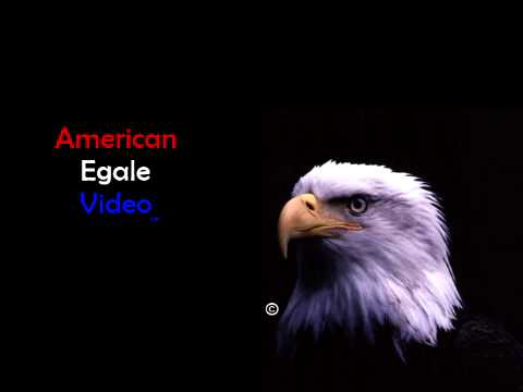 *RECONSTRUCTION* American Egale Video (2000s)