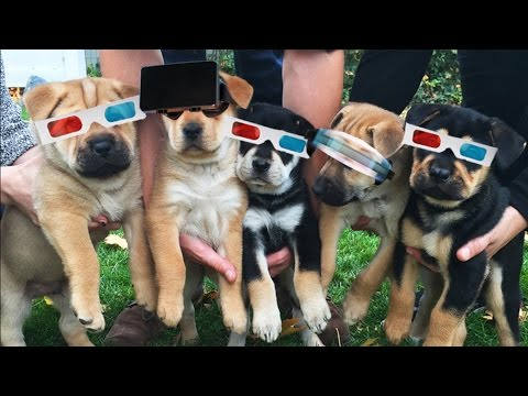 A 360 Degree View Of Puppies Playing