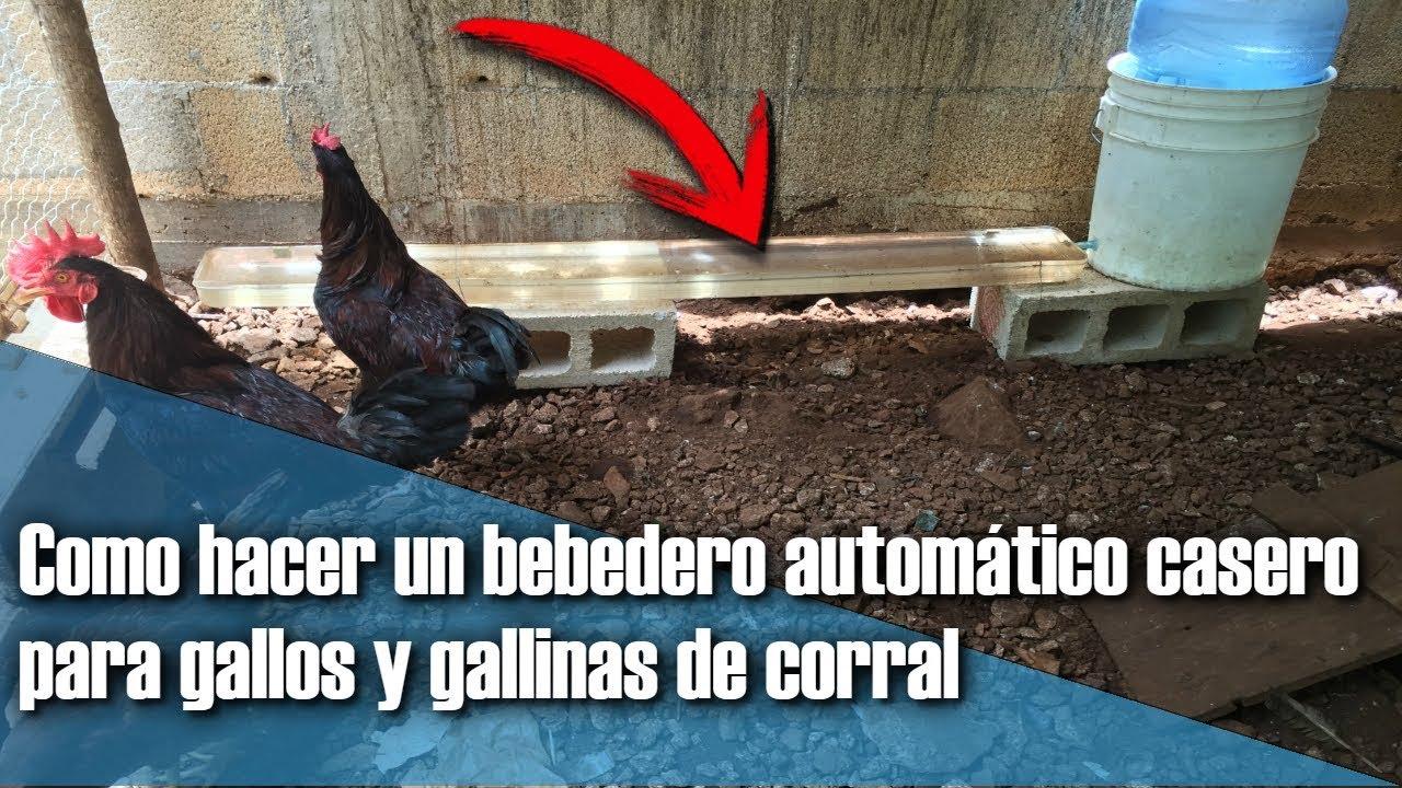 Como hacer un bebedero autom tico casero para gallos y for Como hacer un criadero de peces casero