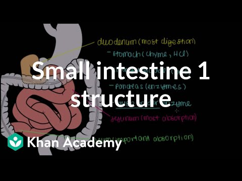 Small intestine 1: Structure | Gastrointestinal system physiology | NCLEX-RN | Khan Academy