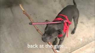 Is This Stick Too Big | Dog Solves Problem