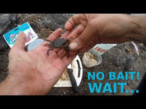 PORGY FISHING - NO BAIT!!! WAIT!!! - Porgies On OLD CLAM, GULP SANDWORMS & ASIAN CRAB